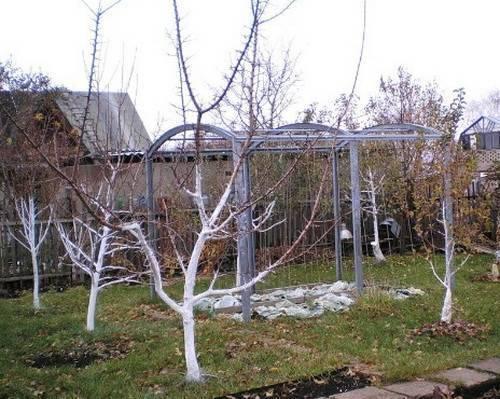 Как уберечь яблоньки зимой