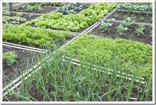 Петрушка: лучшая добавка практически к любому салату