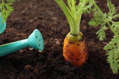Грунт для огорода