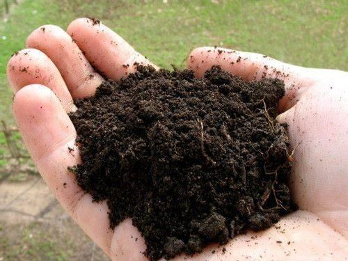 Что такое плодородный грунт