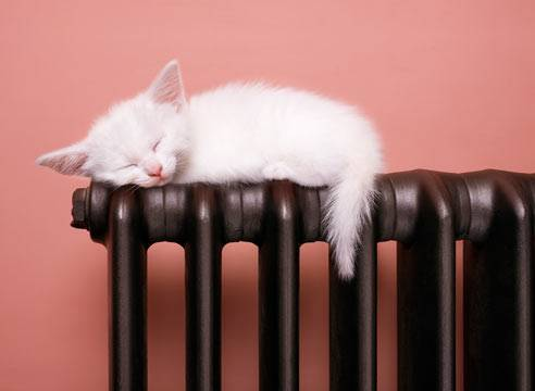 Какой теплоноситель выбрать для системы отопления