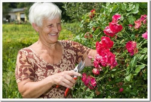 Обеспечение комфортного состояния для растения зимой