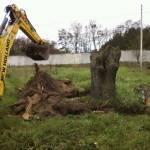 Как проводится удаление дерева целиком